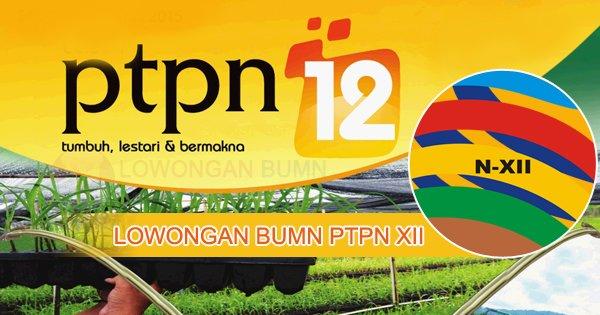 Lowongan BUMN PT Perkebunan Nusantara XII (PTPN XII)